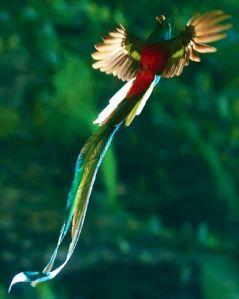 quetzal4