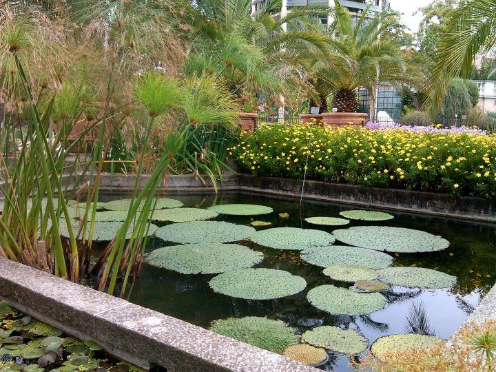 Botanical garden pond, Padua